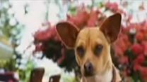 Perdido pra Cachorro Trailer Dublado