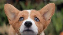 Quatro Vidas de um Cachorro Trailer Legendado