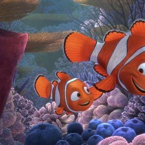 Procurando Nemo : Foto