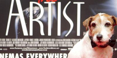 Morreu Uggie, cãozinho que roubou a cena em O Artista