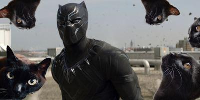 Sucesso de Pantera Negra aumenta o interesse na adoção de gatos pretos