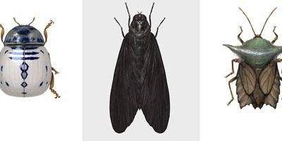 Star Wars: Ilustrador britânico cria insetos inspirados na franquia