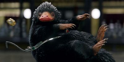 Animais Fantásticos: Os Crimes de Grindelwald revela bebê Pelúcio em nova foto