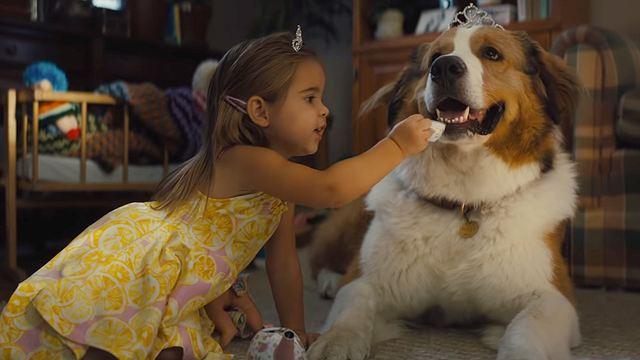 Juntos para Sempre: Sequência de Quatro Vidas de um Cachorro ganha trailer legendado