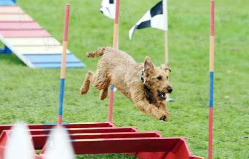 O Cachorro Bombeiro: Todd Holland