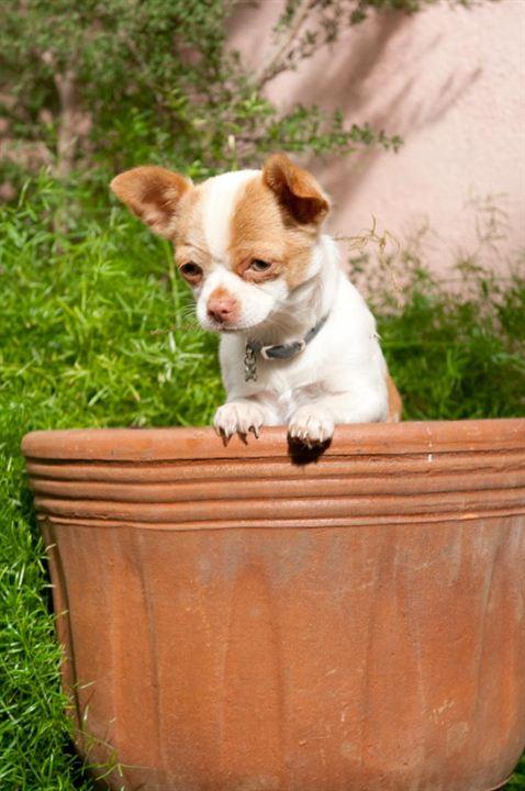Perdido Pra Cachorro 2: Alex Zamm