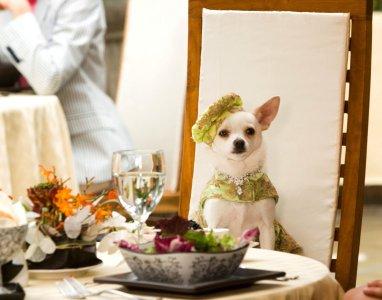 Perdido pra Cachorro : Foto