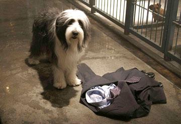 Soltando os Cachorros : Foto