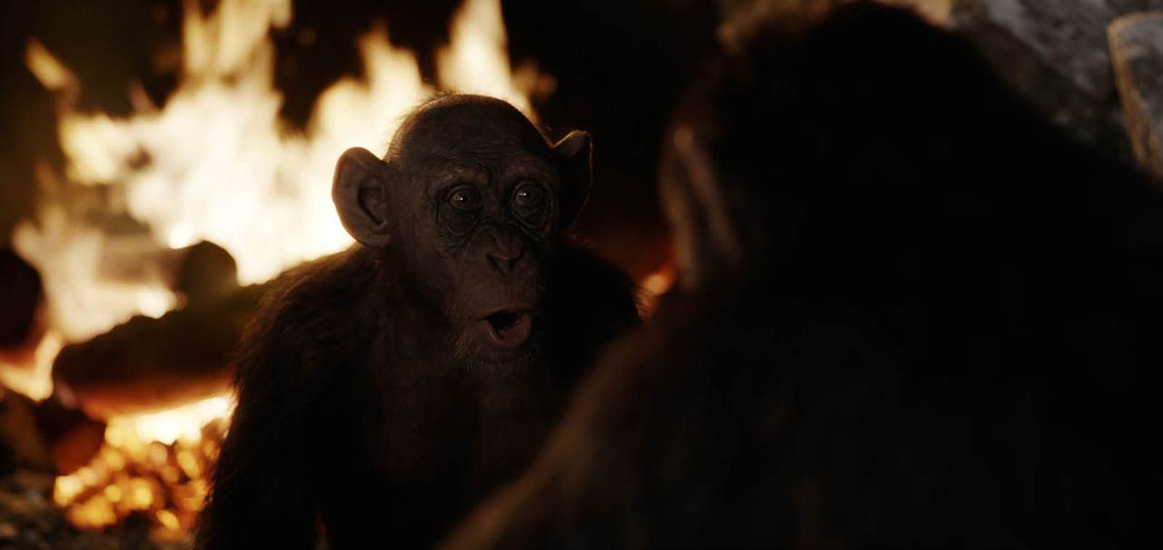 Planeta dos Macacos: A Guerra : Foto