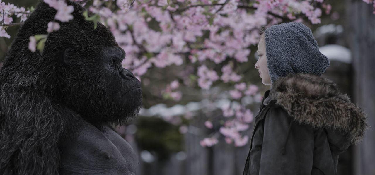 Planeta dos Macacos: A Guerra : Foto Amiah Miller
