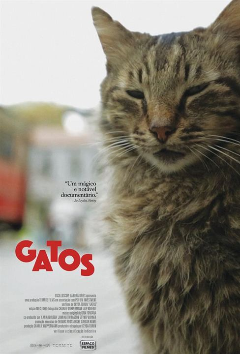 Gatos : Poster