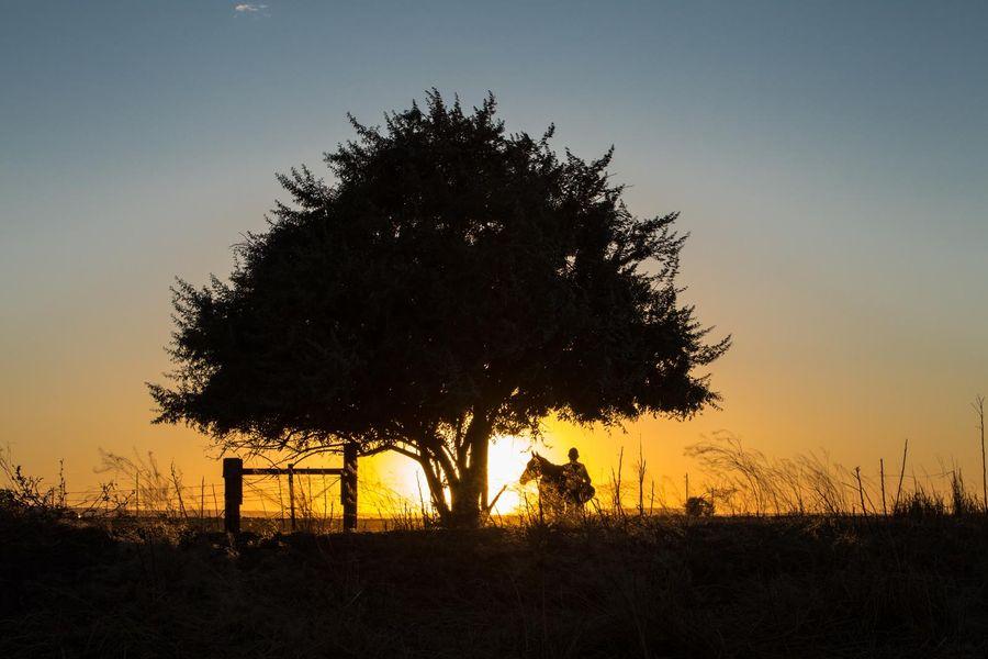 A Rota Selvagem : Foto