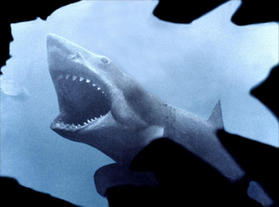 Tubarão : Foto