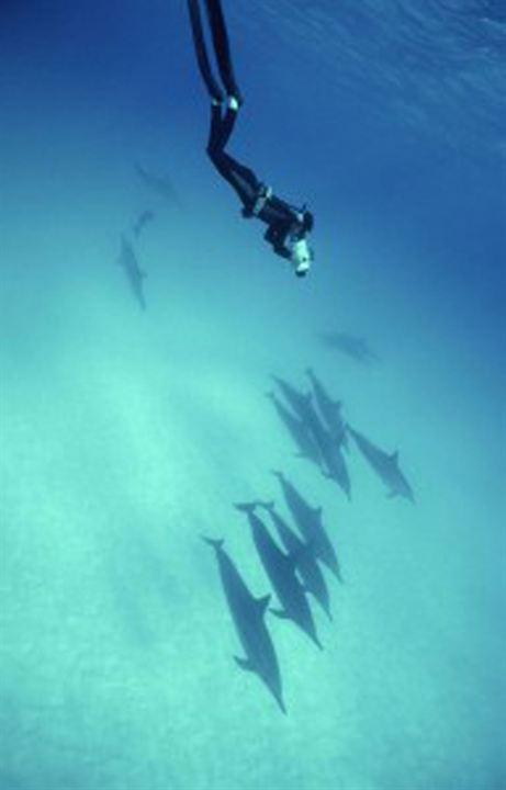 Oceanos de Plástico : Foto