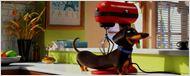 Pets - A Vida Secreta dos Bichos ganha primeiro trailer fofo