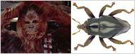 Nova espécie de besouro é o mais recente membro da fauna a ganhar nome inspirado em Star Wars