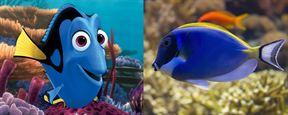 Procurando Dory: Petição quer que Disney e Pixar protejam o peixe cirurgião-patela