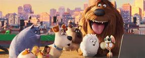 Pets - A Vida Secreta dos Bichos, Café Society e Águas Rasas são as maiores estreias da semana