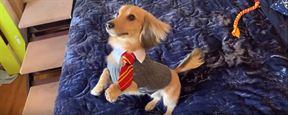 Cachorro treinado em feitiços de Harry Potter faz sucesso na internet