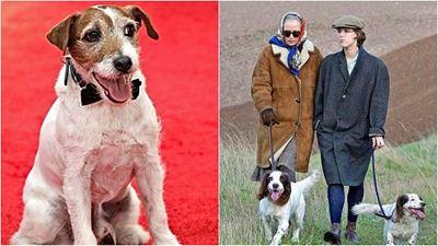 Festival de Cannes 2021: Sabia que existe um prêmio de melhor cachorro em filme? Vencedores do ano já foram anunciados