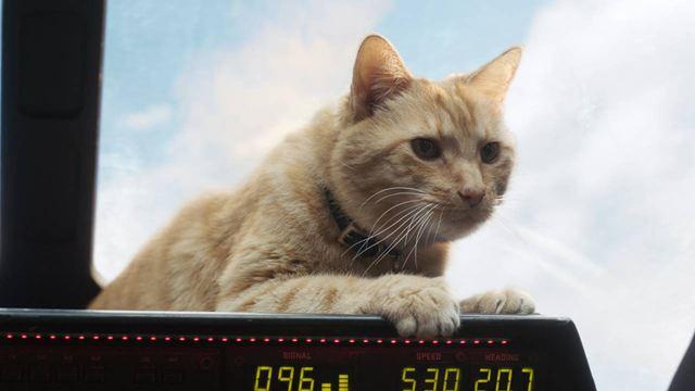 Capitã Marvel: Conheça Goose, a gata de Carol Danvers