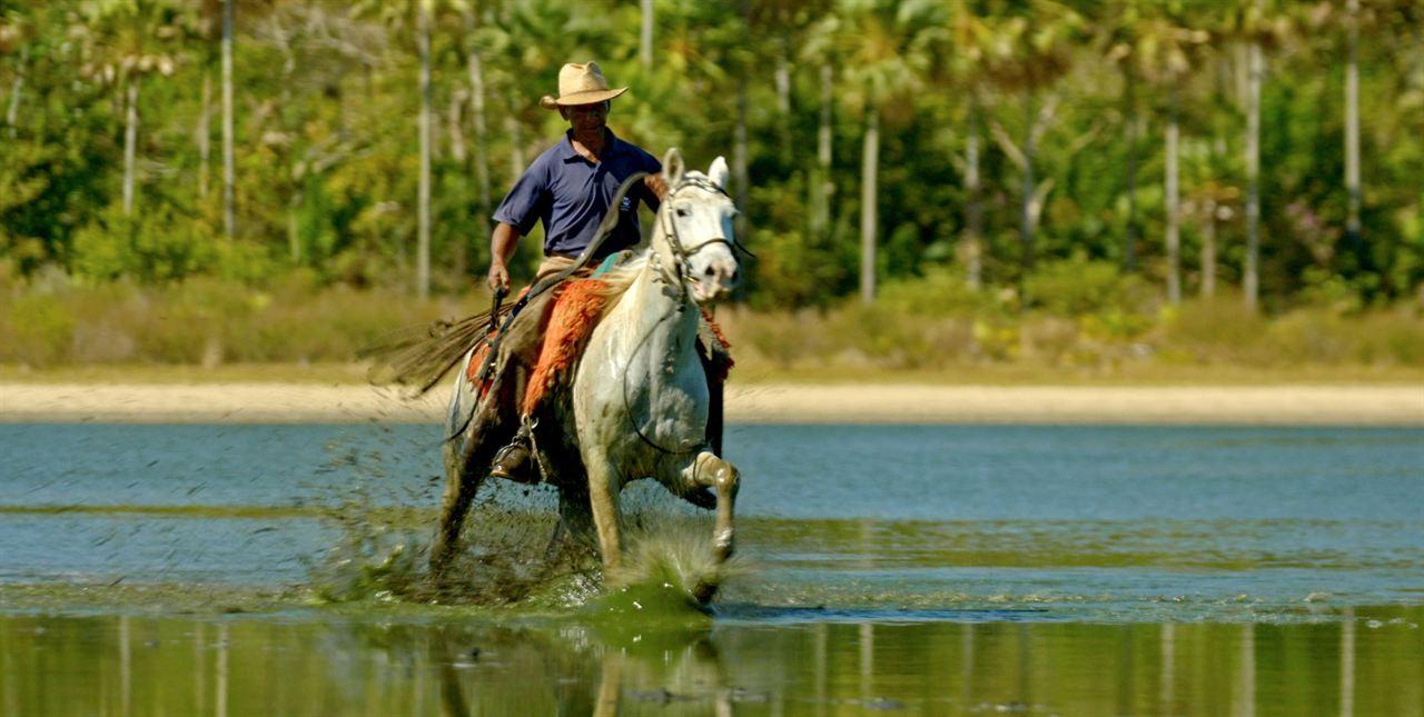 Pantanal, a Boa Inocência de Nossas Origens